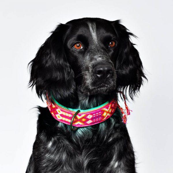 DWAM, Dog with a mission, Halsband, Hundehalsband, Leder, Hippie, Boho, Ibiza, rose, pink, tuerkis
