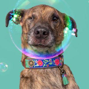 DWAM-Dog-with-a-mission-Hundehalsband-Halsband-weich-komfortabel-Leder-gruen-Blumen-blau-Bluebell
