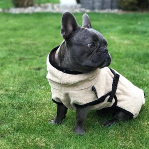 DryUp cape-Mops-Franzoesische Bulldogge-Frenchie-beige-Bademantel-Mantel-Trocknungsmantel-spezielle Groesse1