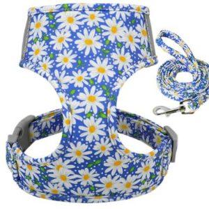 Geschirr-Hundegeschirr-Gstaeltli-Brustgeschirr-Blumen-Margeriten-romantisch-blumig-Hund-Hundeliebhaber-Leine-blau-weiss-gelb.JPG