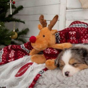 Scruffs-Santa-Paws-Decke-Kuscheldecke-Hundedecke-Wheinachten-Spielzeug-Elch-Hund-Hundeliebhaber-warm-Hund
