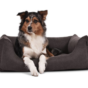 hundebett-worldcollection-comfort-visco-Hundetraueme-Hund-schlafen-braun